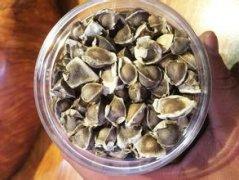 为何要提前了解辣木籽的功效